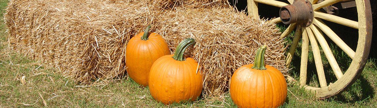 Calgary Pumpkin Hunt | Butterfield Acres Farm